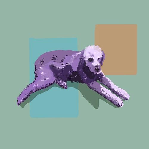 Purple Sofi my golden doodle. Procreate on ipad pro. Fur is hard.