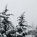 Seattle Snow 1