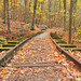 Autumn Logging Railroad
