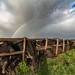 Buffalo's rainbow