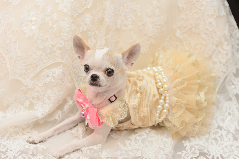 niniko,婚攝,綠舞婚宴,綠舞飯店婚攝,綠舞飯店,BSC_0060