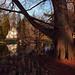 Cincinnati - Spring Grove Cemetery & Arboretum
