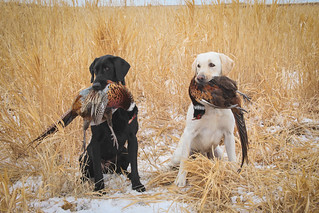 South Dakota Luxury Pheasant Lodge - Gettysburg 138