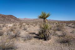 Nevada Desert Scene