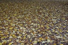 Autumn leaves @ Giardino Mario Capponi @ Milan