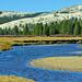 Along the Tuolumne, Yosemite High Country 2019