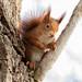 Squirrel Fightclub 👊