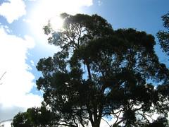 Tree Under Sunlight