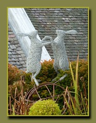 Photo of Boxing Hares