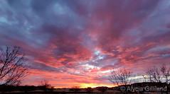 March 1, 2020 - A beautiful, pastel sunrise. (Alycia Gilliland)