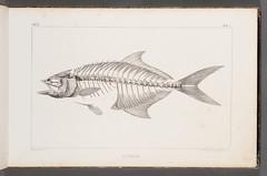 Anglų lietuvių žodynas. Žodis carangidae reiškia <li>carangidae</li> lietuviškai.