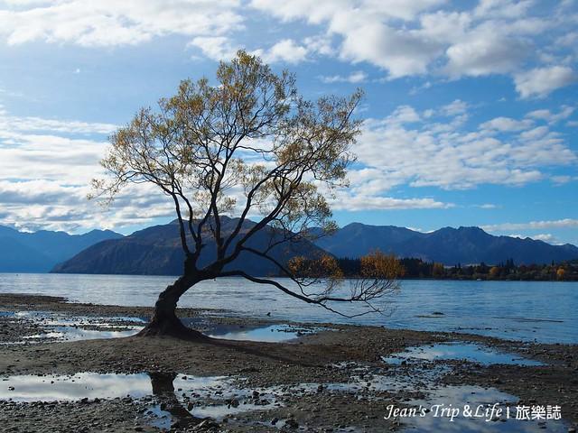 湖中樹是瓦納卡New Zealand 熱門景點