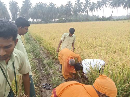 RKMVERI-FAR Crop production - Paddy harvesting(105)