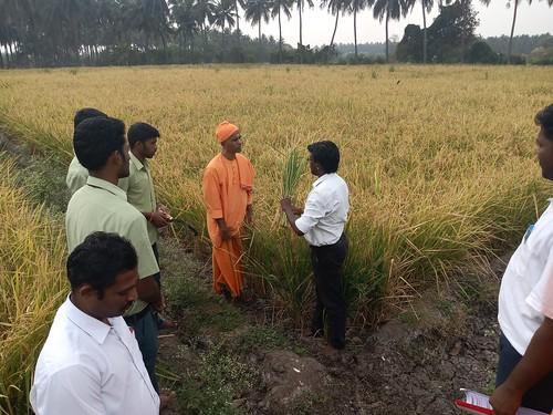 RKMVERI-FAR Crop production - Paddy harvesting(104)