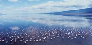 What to see   Africa Safari Lake Natron