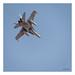 Spain - Air Force McDonnell Douglas EF-18A(M) (C.15-21 / 15-08)
