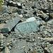 Serpentinite (East Dover Ultramafic Body, Ordovician; Copperhead Road quarry, near East Dover, Vermont, USA) 5
