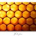 Bee Texture