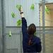 Let's Plant Lettuce