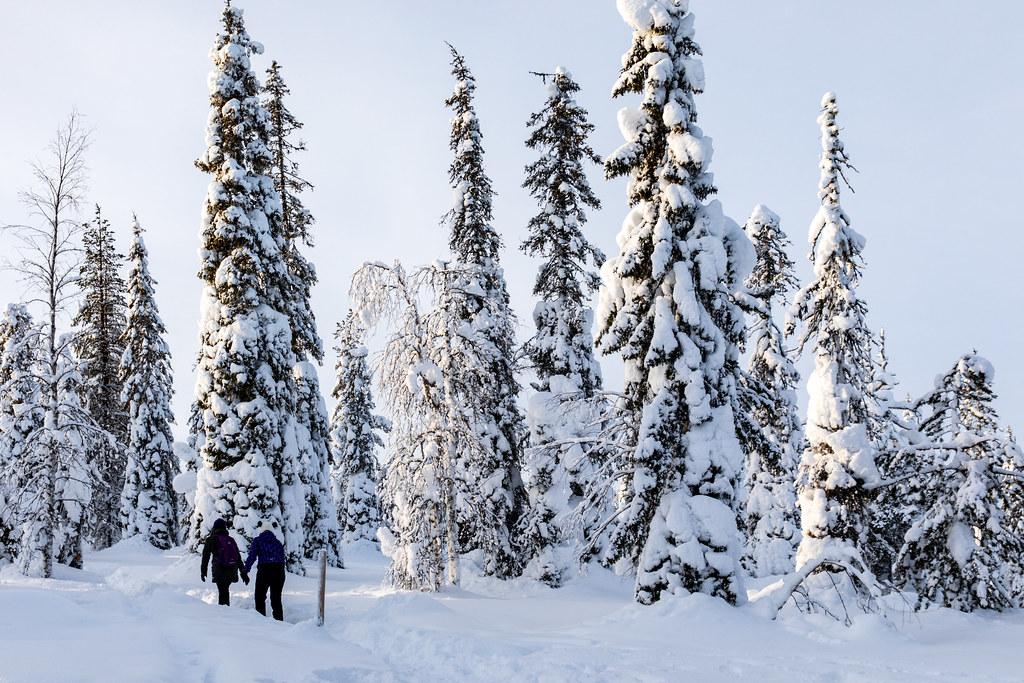 фото: Riisitunturi, Finland