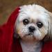 Star Wars Pup