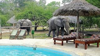 Visitors | Africa Safari Selous