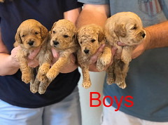 Penny F1B Boys pic 3 3-31