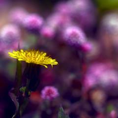 Diferent, però flor