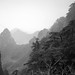 The Lonely Pine - Huangshan