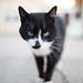 Cat portrait closeup.