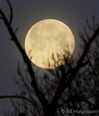 March 10, 2020 - A beautiful full moon. (Bill Hutchinson)