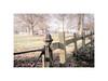 Churchyard fence