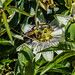 Bumble Bee 10