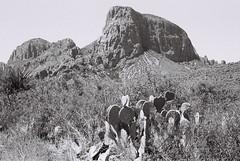 Cactus and Peak