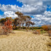 Dunes near Fontanelle, Ugento
