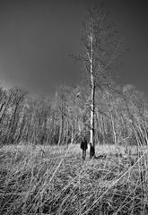 Tree Man....