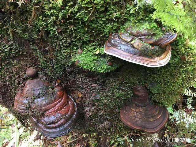 米佛峽灣圖托科河步道有很多菌菇類