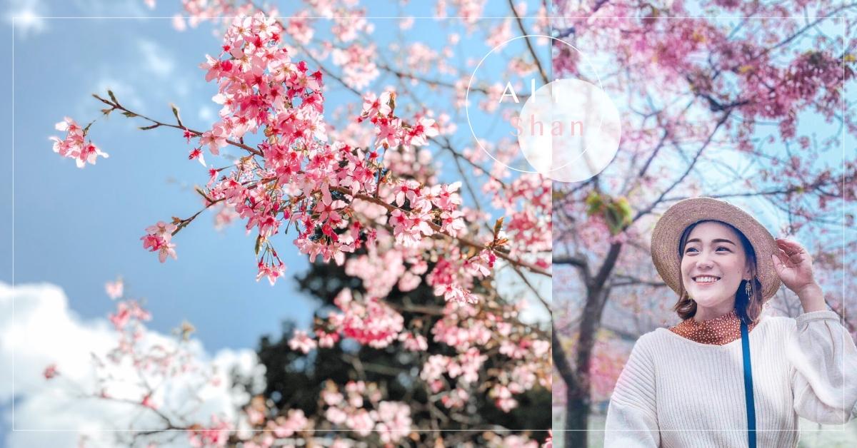 阿里山櫻花季2020|阿里山火車、交通管制、天氣、六大賞櫻景點攻略