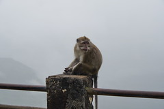 Lonely monkey