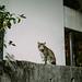 台中,貓的視界
