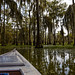 Lake Marting Swamp
