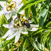 Bumble Bee 14