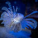 Sea Life Goes On, Even in a Pandemic
