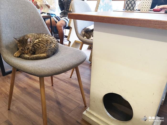 【台北大安】曬貓咖啡│科技大樓站療癒系貓咪咖啡店 輕食早午餐 @魚樂分享誌