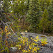 Plutonic rock and tress at east end of Frame Lake , Yellowknife, Great Slave Lake, NWT