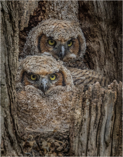 Watchful Eyes by Ron Szymczak