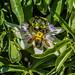 Bumble Bee 15
