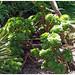 Les jardins de l'île Tatihou