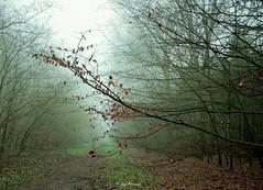 Geldersehout in de mist
