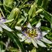 Bumble Bee 16